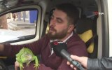 İguanayla Yolcu Taşımak  Diyarbakır