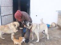 Kediler ile Kangalların Dostluğu