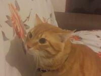 Kedisinin Saldırıları ile Keyiflenen Yurdum İnsanı