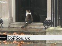 Başbakanlık Konutunun Ünlü Kedisi Larry'nin Kapıda Kalması