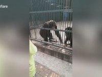Arkadaşının Aldığı Selfie Çubuğunu Geri Veren Şempanze