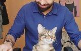 Kedi.exe'nin Yanıt Vermemesi  Piano ve Kedi