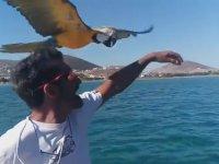 Papağanın Tekne Süren Sahibiyle Yarışması