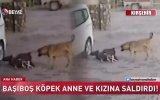 Küçük Kız ve Annesine Saldıran Sokak Köpekleri