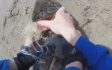 Fok Balığını Plastik Halkadan Kurtarmak