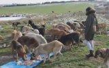 Günde 2 Bin 500 Köpek Besleyen İş İnsanı