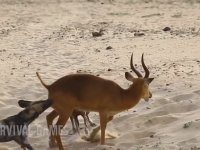 Vahşi Köpekler Neden Bu İsimle Anılır