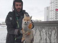 Şehir Merkezine İnen Tilkinin Soğuktan Donması - Sivas