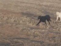 Kaybolan Köpeğin İki Arkadaşıyla Geri Dönmesi