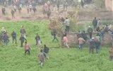 Yerleşim Merkezine İnip İnsanlara Saldıran Leopar  Hindistan