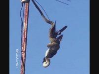 Börtü Böcekli Avustralya'da Sıradan Bir Gün