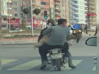 Koyunla Beraber Motosikletle Yolculuk Yapmak