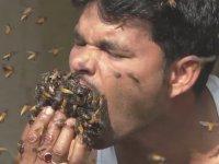 Arılara Fısıldayan Hintli