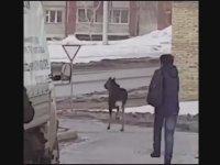 Kedi Atarak Geyik Uzaklaştıran Çılgın Rus