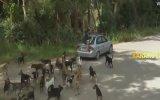 Barınaktaki Köpeklerin Arasında Kalan Muhabir