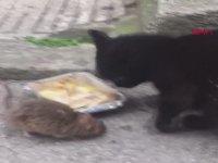 Kedi ile Farenin Aynı Kaptan Yemek Yemesi