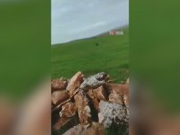 Diyarbakır'da Görüntülenen Leopar