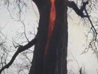 Üzerine Yıldırım Düşen Ağaç