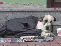 Yağmurda Islanan Köpeğe Montunu Veren Çocuk
