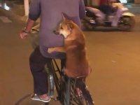 Sahibinin Bisikletinin Arkasında Seyahat Eden Köpek