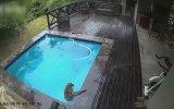 Evin Yüzme Havuzunda Eğlenen Maymunlar