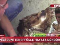 Köpeği Suni Teneffüsle Hayata Döndüren Genç