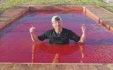 Jöle Havuzunda Yüzmek