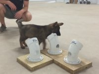 Köpeklere Koku Eğitimi Nasıl Verilir?