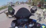 Motosiklet Sürücüsüne Fena Saran Köpekler