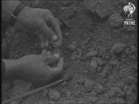 Mohaç Savaşında Ölenlerin Kemiklerinin Çıkarılması (1960)