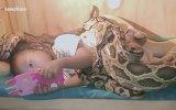 Yılanların Arasında Çizgi Film İzleyen Küçük Kız