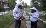 Arıcılık Tanıtım Programında Arı Sokması