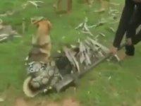 Köpeği Yılandan Kurtaran Çocuklar
