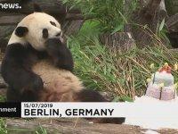 Doğum Günü Pastasına Anlam Veremeyen Panda