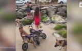 İlk Kez Plajla Tanışan Engelli Köpekler
