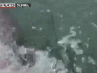 Oltaya Takılan Köpek Balığının Sürüklenmesi