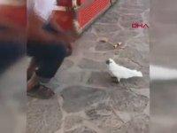 Papağanın Dondurmacı ile İmtihanı