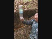 Arıların Yuvasına Şişeyle Vuran Koniçivanın Pert Olması