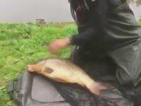 Balıkçıyı Tokatlayan Sazan Balığı