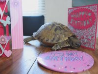121'inci Yaş Gününü Kutlayan Kaplumbağa