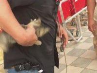 Arabanın Motoruna Giren Yavru Kediyi Zorda Olsa Çıkaran Sürücü