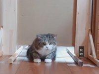 Kedilerde Yükseklik Testi