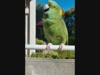 Ödülü Aldıkça Coşan Papağan