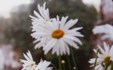 Paula Fernandes - Um Ser Amor view on izlesene.com tube online.