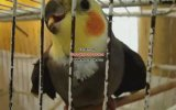 Konuşan Papağan