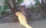 Kedi ile Papağanın Amansız Kavgası