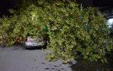 Şiddetli Rüzgar Nedeniyle Çok Sayıda Ağaç Yerinden Söküldü - Batman