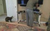 Sahibinin Poposunu Isıran Kedi