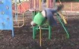 Amazing Jimnastik