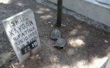 Kaplumbağa Ç